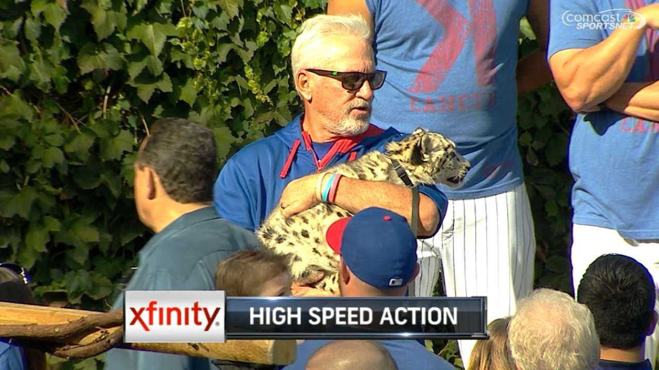 Joe Madden populates Wrigley Field with the zoo