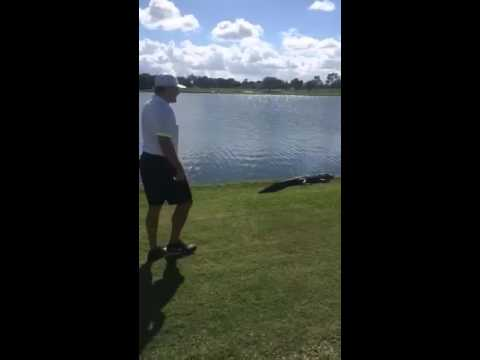 Former NHL player Jeremy Roenick tries to tackle alligator on golf course