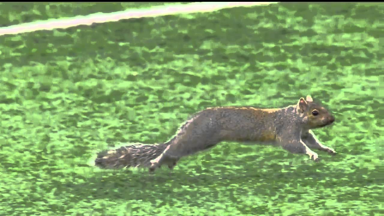 Squirrel steals the show during Packers vs Vikings