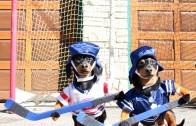 It's 2016 & wiener dogs now play ball hockey