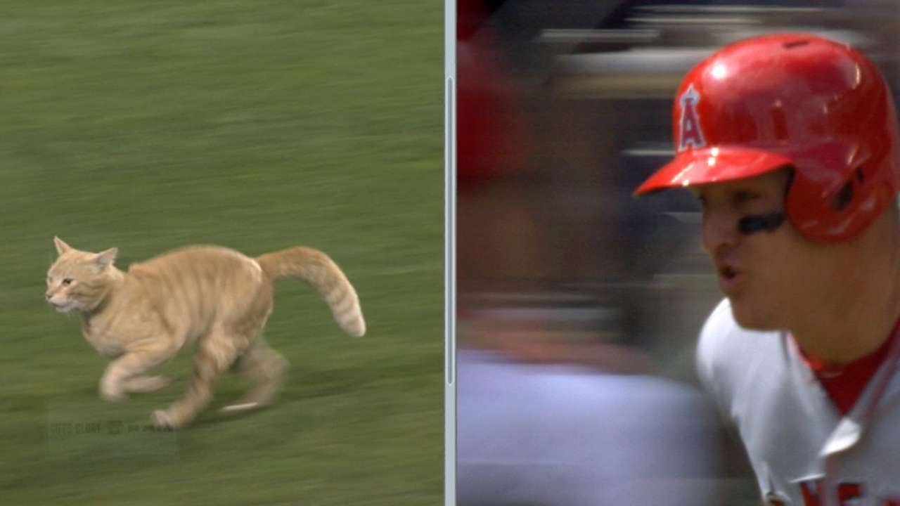 Angels broadcast compare cats speed to Mike Trout's speed