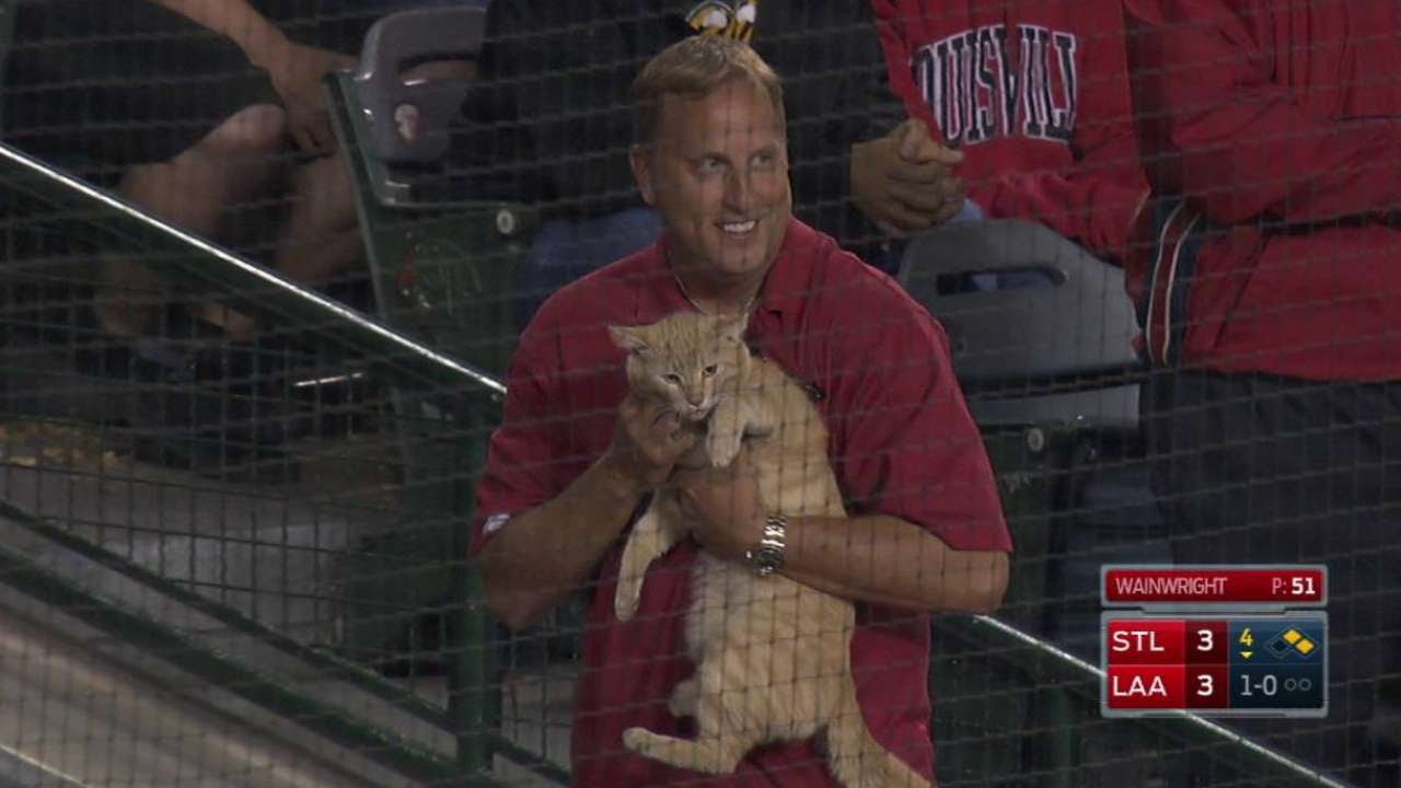 Cat runs on the field at Angels game