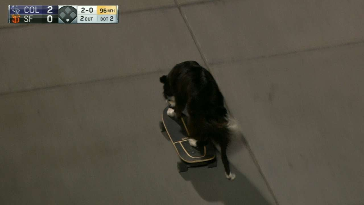 Skateboarding dog makes an appearance during Giants game