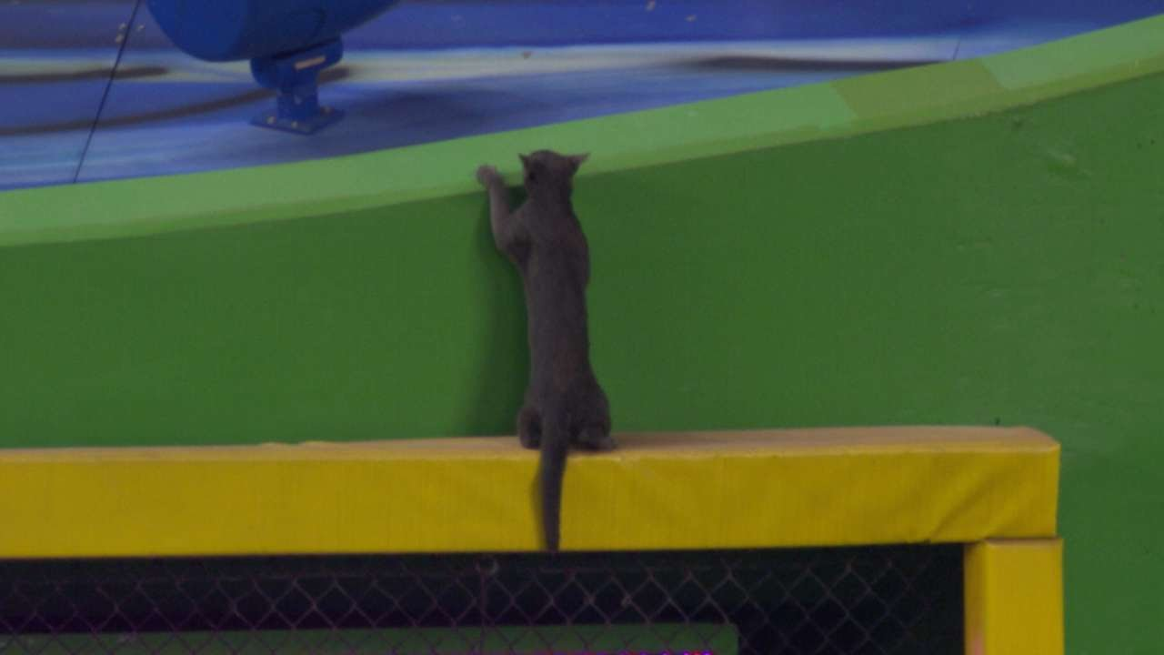 Cat invades the Miami Marlins game