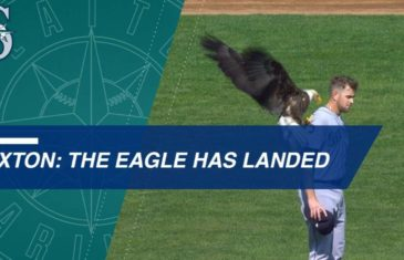 Bald eagle lands on Mariners pitcher James Paxton during anthem