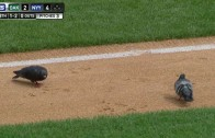Pigeons take over field at Yankee Stadium