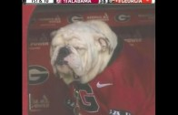 Georgia Bulldogs mascot Uga suffers in the rain during beatdown
