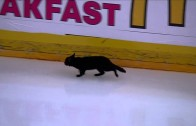 Bad Luck? A black cat runs across the ice during Sharks & Predators game